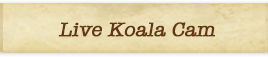 Nighttime Zoo